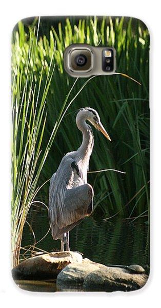 Great Blue Heron Galaxy S6 Case by Ellen Henneke