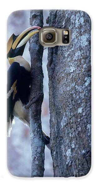 Great Hornbill Galaxy S6 Case by Art Wolfe