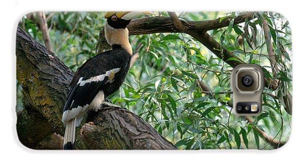 Great Indian Hornbill Galaxy S6 Case by Art Wolfe
