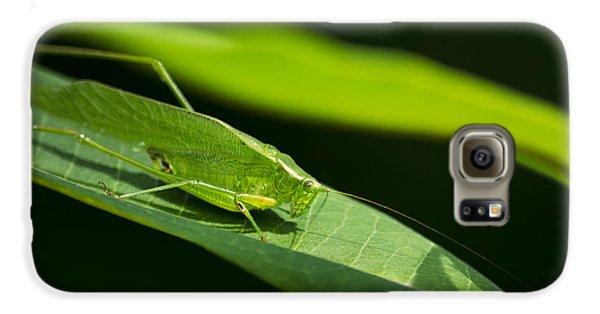 Green Katydid Galaxy S6 Case by Christina Rollo