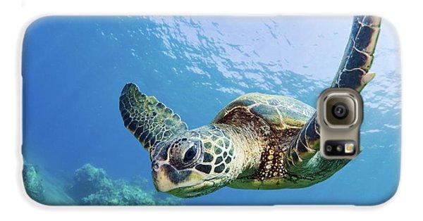 Green Sea Turtle - Maui Galaxy S6 Case by M Swiet Productions