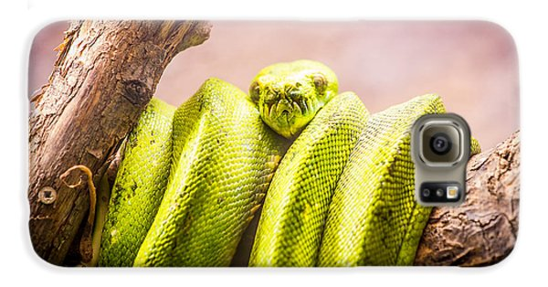 Green Tree Python Galaxy S6 Case by Pati Photography