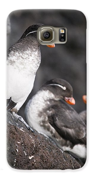 Group Of Parakeet Auklets, St. Paul Galaxy S6 Case by John Gibbens