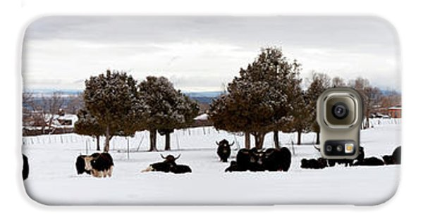 Herd Of Yaks Bos Grunniens On Snow Galaxy S6 Case by Panoramic Images
