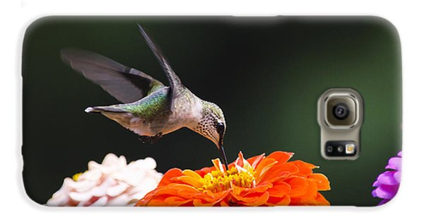 Hummingbird In Flight With Orange Zinnia Flower Galaxy S6 Case by Christina Rollo