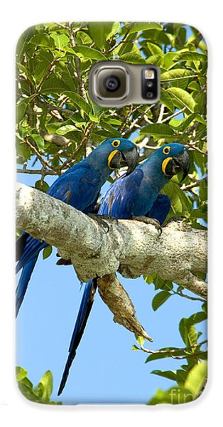 Hyacinth Macaws Brazil Galaxy S6 Case by Gregory G Dimijian MD