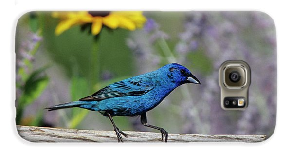 Indigo Bunting (passerina Cyanea Galaxy S6 Case by Richard and Susan Day