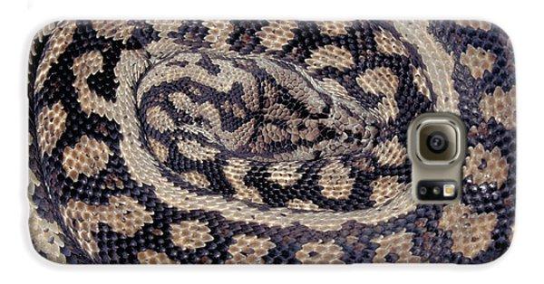 Inland Carpet Python  Galaxy S6 Case by Karl H Switak