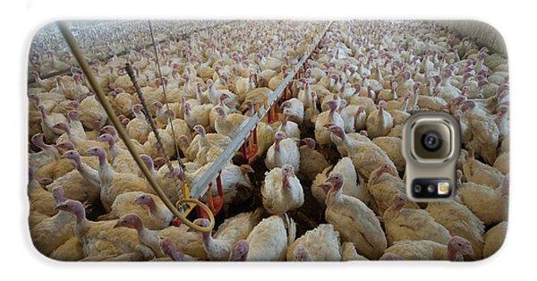 Intensive Turkey Farm Galaxy S6 Case by Peter Menzel