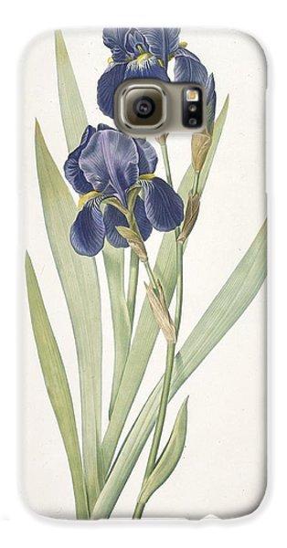 Iris Germanica Bearded Iris Galaxy S6 Case by Pierre Joseph Redoute