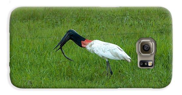 Jabiru Stork Swallowing An Eel Galaxy S6 Case by Gregory G. Dimijian, M.D.