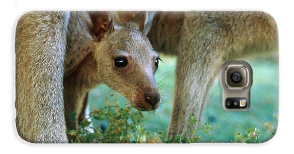 Kangaroo Joey Galaxy S6 Case by Mark Newman