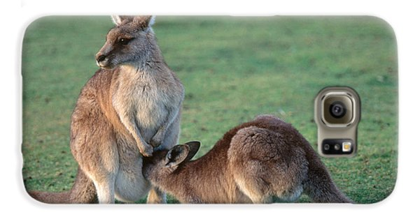 Kangaroo With Joey Galaxy S6 Case by Gregory G. Dimijian, M.D.