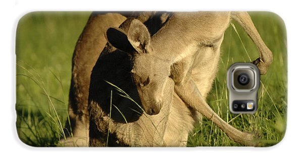 Kangaroos Taking A Bow Galaxy S6 Case by Bob Christopher