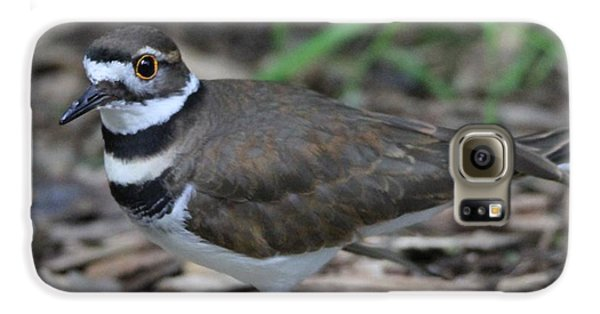 Killdeer Galaxy S6 Case by Dan Sproul