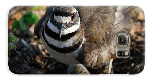 Killdeer Mom Galaxy S6 Case by Skip Willits