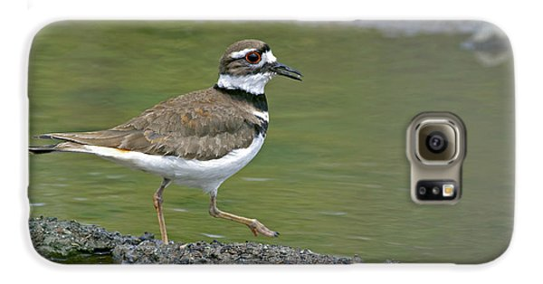 Killdeer Walking Galaxy S6 Case by Sharon Talson