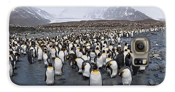King Penguins Aptenodytes Patagonicus Galaxy S6 Case by Panoramic Images