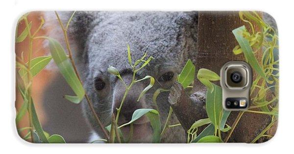 Koala Bear  Galaxy S6 Case by Dan Sproul