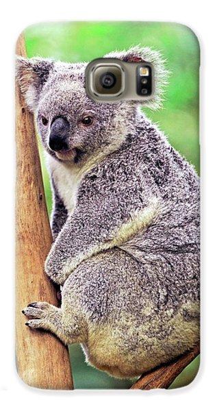 Koala In A Tree Galaxy S6 Case by Bildagentur-online/mcphoto-schulz