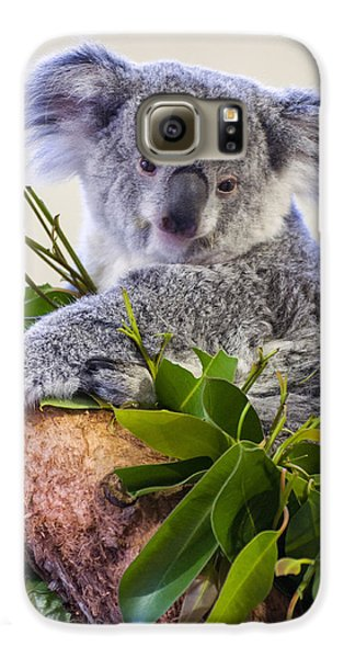 Koala On Top Of A Tree Galaxy S6 Case by Chris Flees