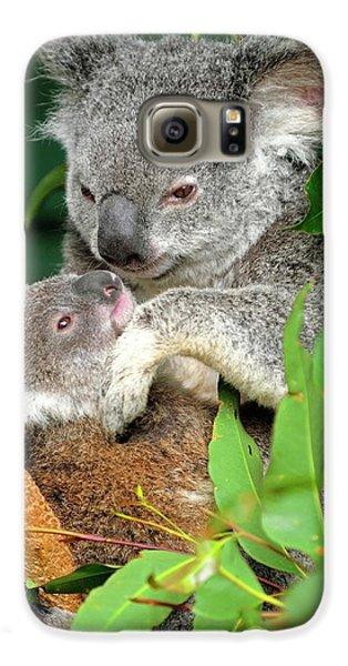 Koalas Galaxy S6 Case by Bildagentur-online/mcphoto-schulz
