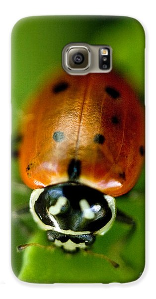 Ladybug On Green Galaxy S6 Case by Iris Richardson