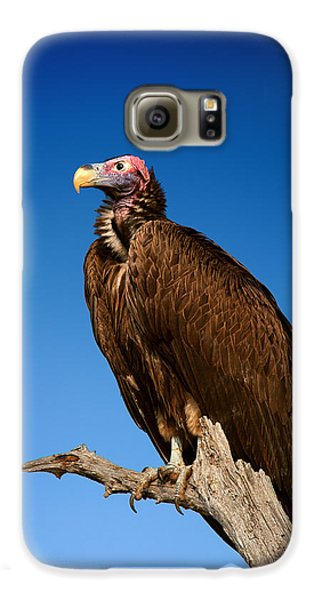 Lappetfaced Vulture Against Blue Sky Galaxy S6 Case by Johan Swanepoel