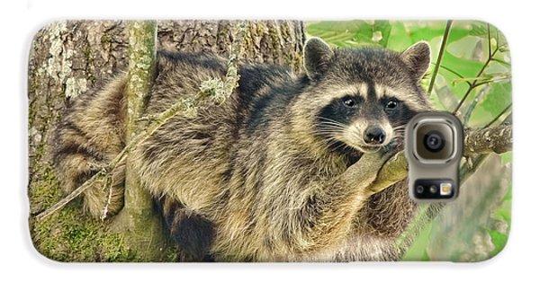 Lazy Day Raccoon Galaxy S6 Case by Jennie Marie Schell