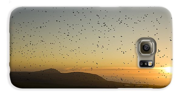 Least Auklets, Returning To Their Nest Galaxy S6 Case by Brian Guzzetti