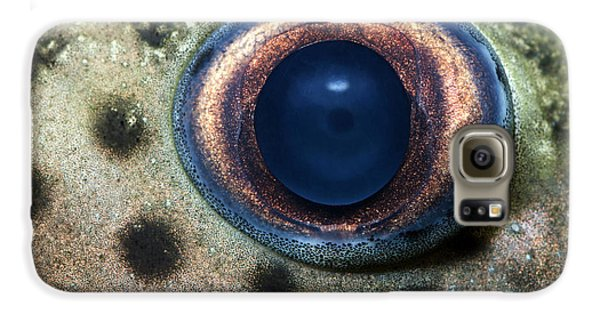 Leopard Sailfin Pleco Eye Abstract Galaxy S6 Case by Nigel Downer