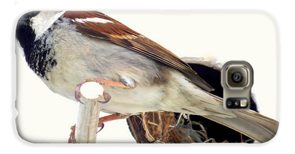 Little Sparrow Galaxy S6 Case by Karen Wiles