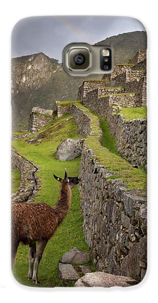Llama Stands On Agricultural Terraces Galaxy S6 Case by Jaynes Gallery