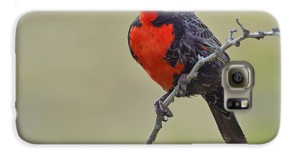 Long-tailed Meadowlark Galaxy S6 Case by Tony Beck