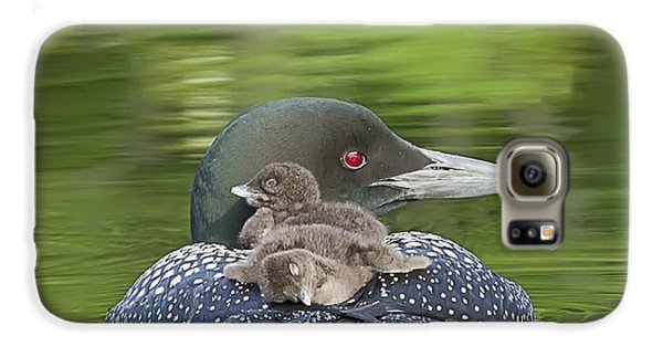Loon Chicks -  Nap Time Galaxy S6 Case by John Vose