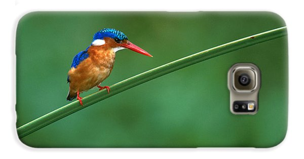 Malachite Kingfisher Tanzania Africa Galaxy S6 Case by Panoramic Images