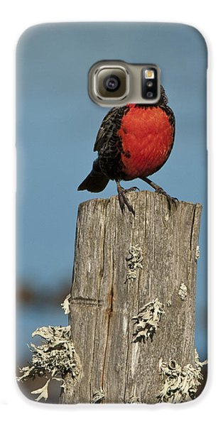 Male Long-tailed Meadowlark On Fencepost Galaxy S6 Case by John Shaw