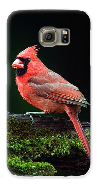 Male Northern Cardinal Cardinalis Galaxy S6 Case by Panoramic Images