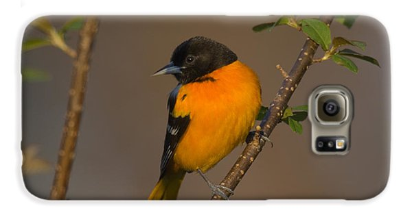 Male Northern Oriole Galaxy S6 Case by Thomas and Pat Leeson