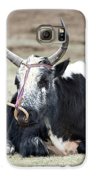Male Yak In Potatso National Park Galaxy S6 Case by Tony Camacho