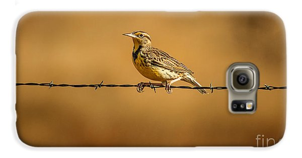 Meadowlark And Barbed Wire Galaxy S6 Case by Robert Frederick