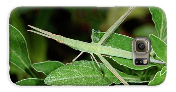 Mediterranean Slant-faced Grasshopper Galaxy S6 Case by Nigel Downer