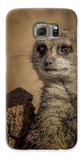 Meerkat Galaxy S6 Case by Ernie Echols