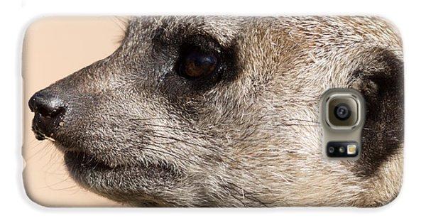 Meerkat Mug Shot Galaxy S6 Case by Ernie Echols