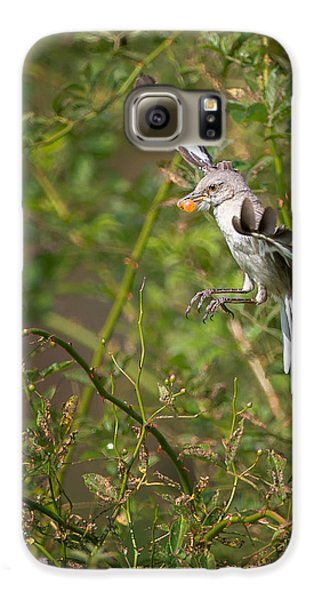 Mockingbird Galaxy S6 Case by Bill Wakeley