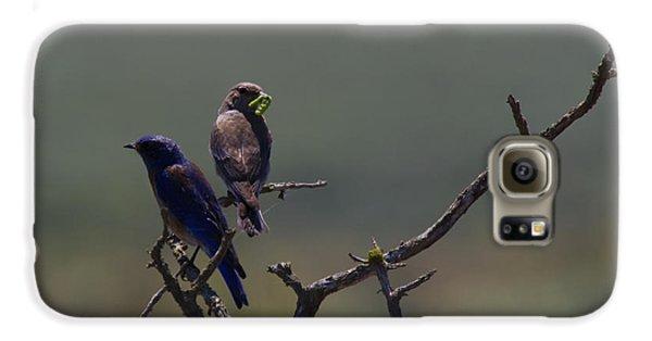 Mountain Bluebird Pair Galaxy S6 Case by Mike  Dawson