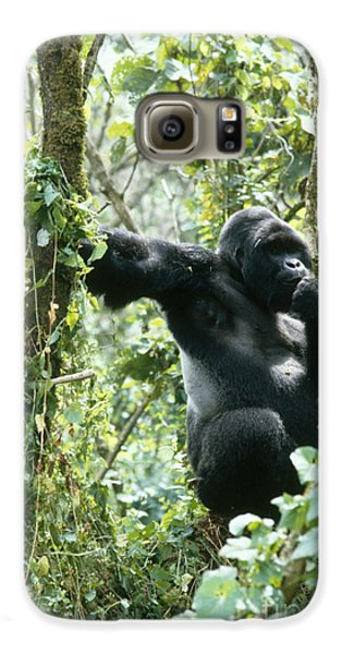 Mountain Gorilla Galaxy S6 Case by Tierbild Okapia