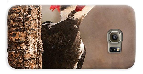Mr. Pileated Galaxy S6 Case by Lara Ellis