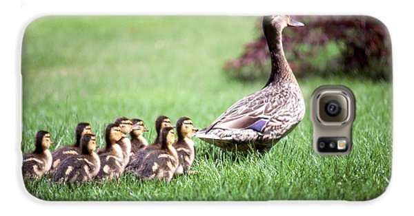 Mumma Duck And Kids Galaxy S6 Case by King Wu