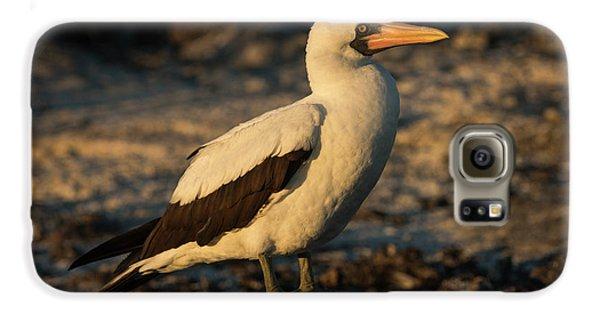Nazca Booby (sula Granti Galaxy S6 Case by Pete Oxford